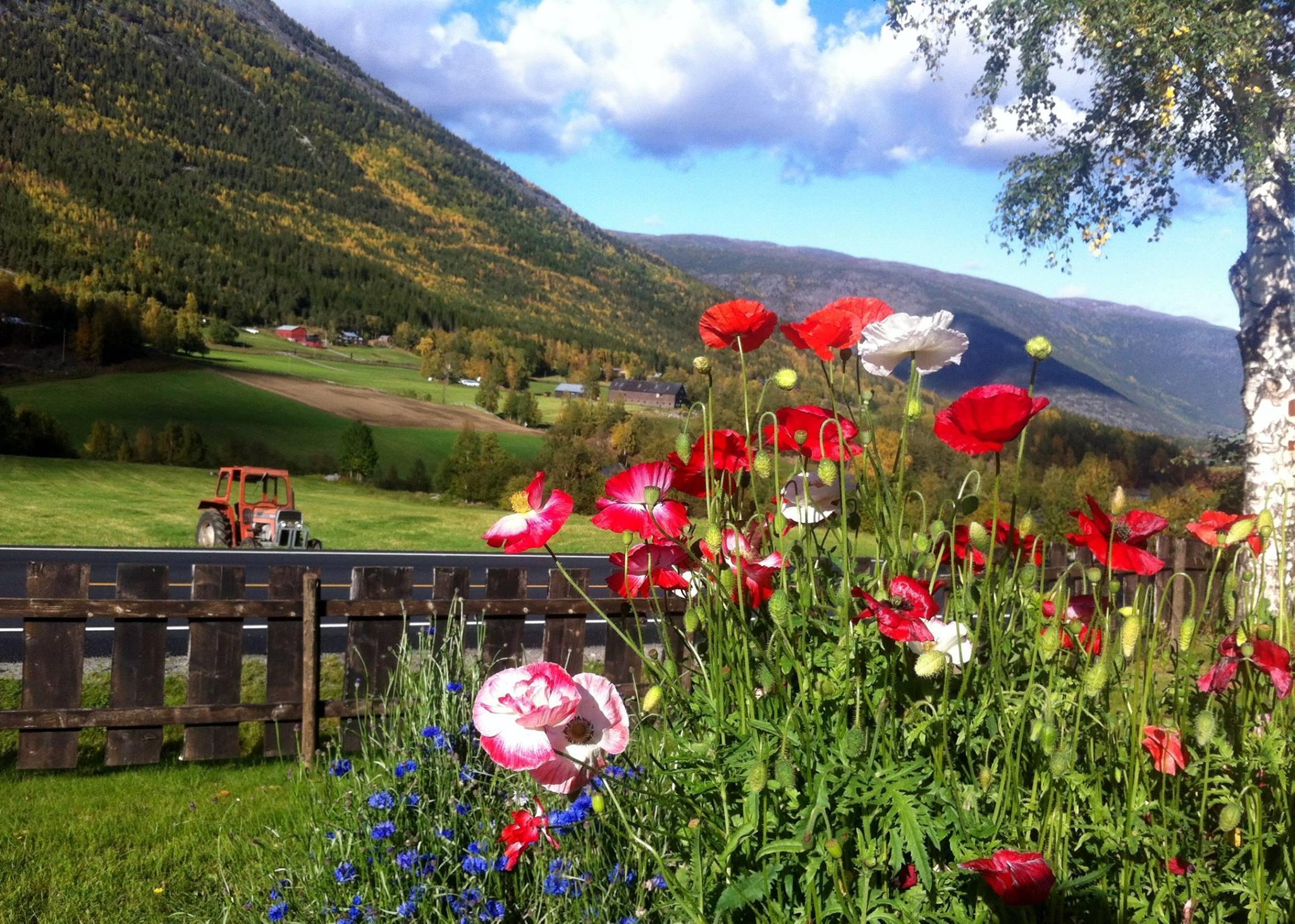 Bilde av blomster på Strind Gard