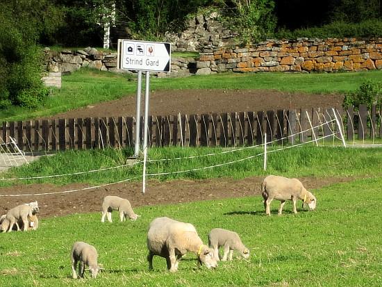 Bilde av skiltet til strind gard